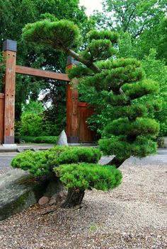 Wroclaw Japanese garden Japanese garden Ogród japoński - All About Japanese Garden Plants, Japan Garden, Japanese Garden Design, Japanese Gardens, Topiary Garden, Garden Trees, Garden Bridge, Backyard Garden Design, Colorful Garden