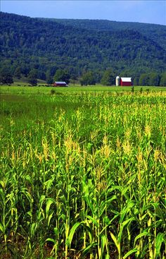 Many successful farms can be found in the valleys of Hardy County. WV