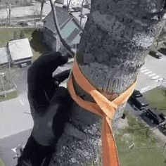 Professional pruning of trees