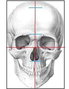 Skull Anatomy, Head Anatomy, Human Anatomy Drawing, Anatomy Art, Tattoo Outline Drawing, Outline Drawings, My Drawings, Skull Reference, Anatomy Images