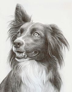 Collie by Katrina Ann on ARTwanted