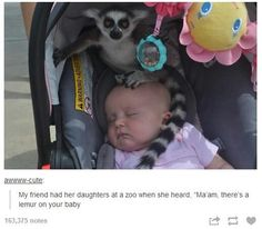 Lemur on the Baby!