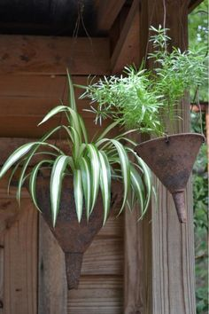 "Here is another great idea for repurposing in the garden.    I particularly like the fact that the old funnels are almost purpose built with their ""drain hole"" at the bottom.    What do you think of the idea?"