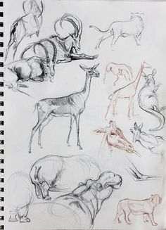 Animal studies || CHARACTER DESIGN REFERENCES | Find more at https://www.facebook.com/CharacterDesignReferences if you're looking for: #line #art #character #design #model #sheet #illustration #best #concept #animation #drawing #archive #library #reference #anatomy #traditional #draw #development #artist #how #to #tutorial #conceptart #modelsheet #animal #animals