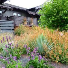 Native Garden – Creative Landscapes, Inc. Landscape Design Small, Creative Landscape, Exotic Plants, Tropical Plants, Low Maintenance Garden, Craftsman Style, Garden Inspiration, Purple Flowers, Palm Trees