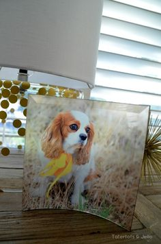 Feature your furry friends on our curved glass prints. #sflydecor