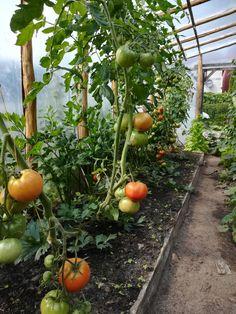 Vegetables, Plants, Food, Essen, Vegetable Recipes, Meals, Plant, Yemek, Veggies