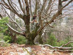 Tree climbing Val di Mello, Italy