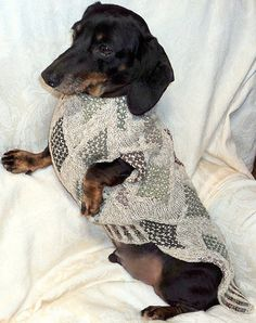 Sewing Pattern for Dachshund Sweater & Snood by by WarmWeenies on Etsy, $8.75
