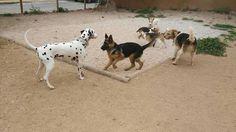 Juegos en el parque canino 04/16 Dama, Robin, Luly, Kiara, Manchita
