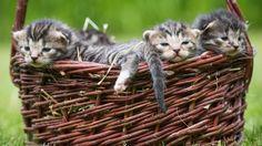 Vorteile einer Kastration von Katzen