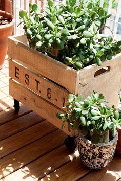 A caixa de madeira com rodízios lembra um caixote de feira e esconde o vaso com crássula na varanda do arquiteto Alexandre Skaff