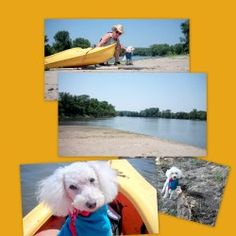 Chancey is an adoptable Bichon Frise Dog in Bloomfield, IA. Chancey is a wonderful lil guy. He's not yappy,not snippy,but calm --sort of an old soul in a lil white fuzzy body. You could take him anywh...