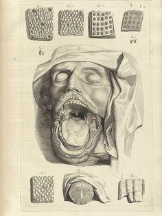 Medical Drawings, Medical Art, Human Anatomy Art, Anatomy Drawing, Medical Illustration, Illustration Art, Illustrations Médicales, La Danse Macabre, Le Cri