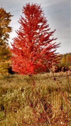 Autumn in marshfield wi