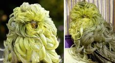 Animals with amazingly good hair ~Feather Duster Budgie