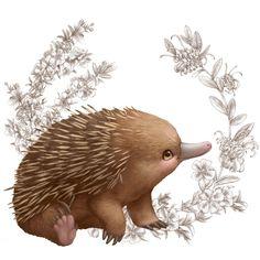 Little Aussie Friends illustrations - www.elisemartinson.com
