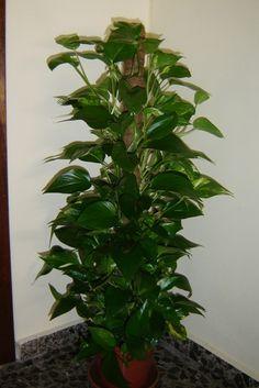 Hydrogen peroxide for house plants / HandWork Art Herb Garden, Indoor Garden, Vegetable Garden, Garden Plants, Indoor Plants, Container Gardening, Gardening Tips, Beautiful Gardens, Beautiful Flowers
