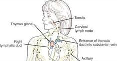 When was the Last Time You Drained Your Lymph Fluids?