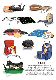 "Richard Skipworth on Twitter: ""Today's entry for my Greyhound Glossary. ( Coming soon in book form!)… """