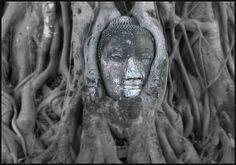 entangled buddha