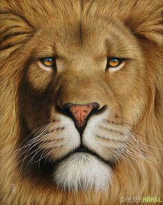 Animals, animal pictures, animal painting in oil and acrylic - Portrait of a Lion – Peter Höhsl Lion Wallpaper, Animal Wallpaper, Big Cats Art, Cat Art, Beautiful Lion, Animals Beautiful, Tiger Artwork, Lion Photography, Lion Love