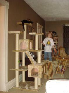 cat tower cat gymbig - Cat Jungle Gym