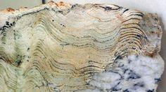 """Onderzoekers hebben in Groenland het oudste fysiek bewijs gevonden voor leven op aarde, in de vorm van fossielen rotsen die 3,7 miljard jaar geleden gevormd zijn. Het gaat om stromatolieten, """"levende rotsen"""" die ontstaan doordat een kolonie bacteriën dunne laagjes sediment vangt en bindt of maakt dat carbonaat zich afzet uit water."""