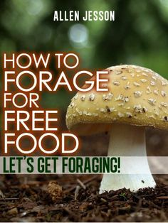 How To Forage For Free Food - Let's Get Foraging (Foraging Free Food Series) by Allen Jesson, http://www.amazon.com/dp/B007R6D2YG/ref=cm_sw_r_pi_dp_sZZGpb1TBSCG2