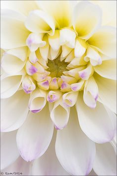 ~~White Dahlia by Floral Colors~~