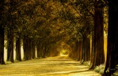 Photo Metasequoia Road by Tony Lee on 500px