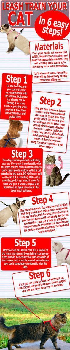 Cat Care Tips... How to train you cat to walk on a leash. Wish I would have know this way earlier. I think my cats have already learned to hate the leash.