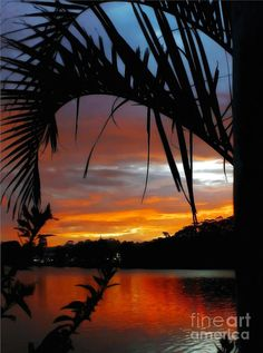 ✮ Palm framed Sunset - Narrabeen Lakes - Sydney, Australia