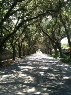 Magnolia Avenue, Saint Augustine, FL