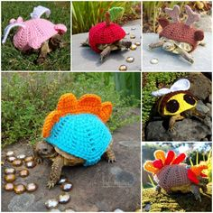 If you have the tortaddiction symptom, you will fall in … Crocheted Tortoise Cozy Read Tortoise House, Tortoise Habitat, Baby Tortoise, Sulcata Tortoise, Tortoise Turtle, Cute Turtles, Baby Turtles, Turtle Sweaters, Crochet Turtle