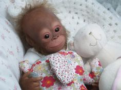 Baby Orangutan. I am not so sure there is another baby cuter than this one.