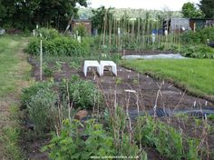 How to clear an overgrown allotment of weeds