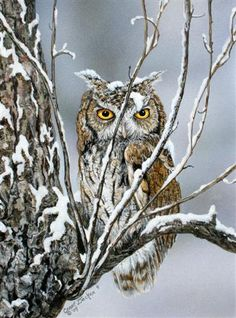 owl in snow by Carol Decker