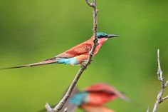 Birdlife at Motswari Private Game Lodge. Quote & Book: http://www.south-african-hotels.com/