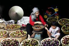Bonne récolte des fruits Beautiful Vietnam, North India, Vietnam Travel, Hanoi, Asia, Tropical, Photography, Fruit Garden, Abundance