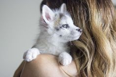 Baby marble fox - fully domesticated!