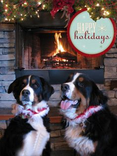 "Merry ""Berner"" Christmas from Breckee & Waldo"