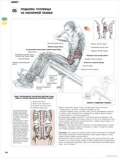 5. Подъемы туловища на наклонной скамье