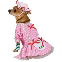 Country Pup Strawberry Shortcake Dog Costume Small -- Details can be found by clicking on the image.
