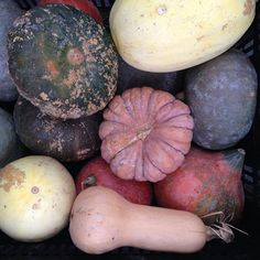 #Manhattan has #gourds and #squash aplenty! #farmersmarketnyc Union Square Greenmarket