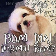 Bom Dia Cachorro Frases Dogs Humor E Good Morning