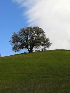 Oak Tree and Yin Yang Sky by Meg Solaegui at Wilbur Hot Springs