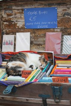 Tortoise shell calico cat taking a nap in a pile of books.