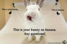 /r/rabbits is an open community where users can learn, share cute pictures, or ask questions about rabbits. Please note we are a *pet rabbit*. Rabbit Rabbit Rabbit, Rabbit Life, House Rabbit, Rabbit Stew, Bunny Meme, Funny Bunnies, Cute Funny Animals, Cute Bunny Pictures, Rabbit Pictures