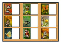 Board for the orange butterfly matching game. By Autismespektrum.